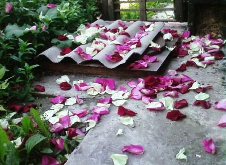 Дожди из роз