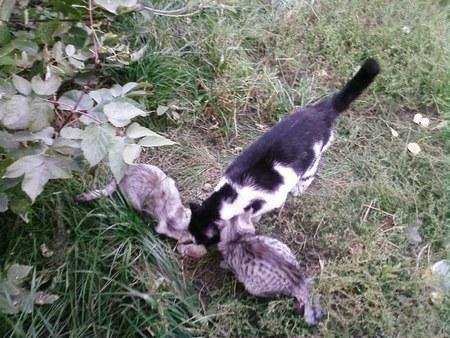 Выбросили кошку и двух котят