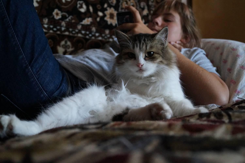 Частная жизнь кошек