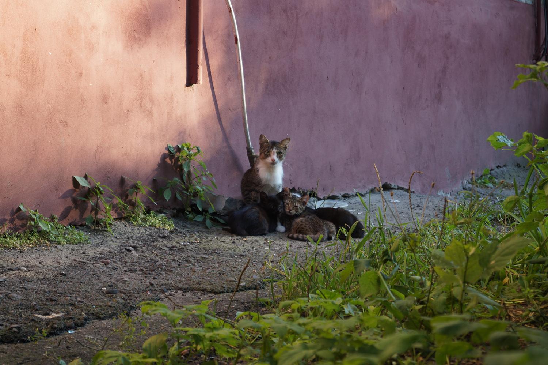 О бездомных кошках